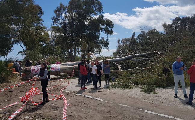 Protestas por la tala de árboles en Arraijanal para construir La Academia del Málaga