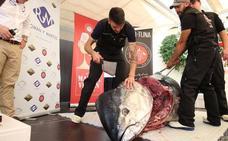 El ronqueo de una pieza de 300 kilos abre las II Jornadas del Atún de El Pimpi y La Sole