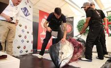 Un homenaje al atún rojo en el corazón de Málaga