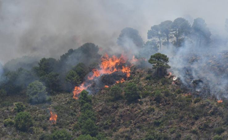 El incendio de Benahavís, en fotos