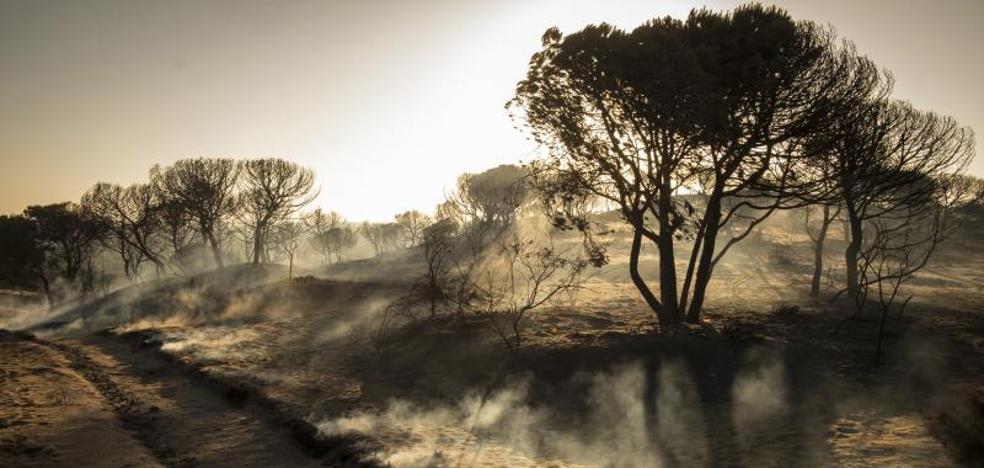 Dan por controlado el incendio forestal en el entorno de Doñana