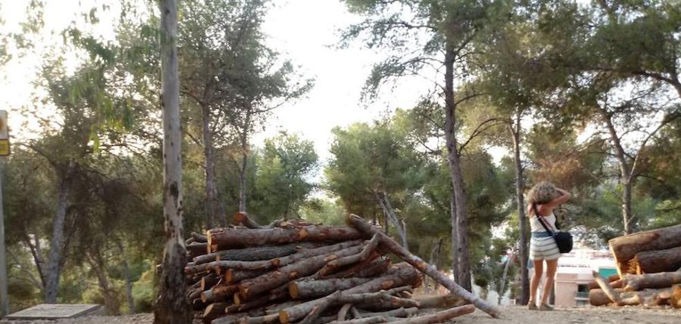 Las quejas por talas de Gibralfaro llegan a medio ambiente