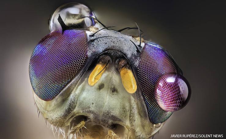 Las impresionantes fotografías de insectos tomadas por un vecino de Almáchar