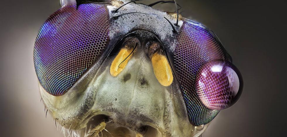 Las aterradoras imágenes de insectos de un vecino de Almáchar