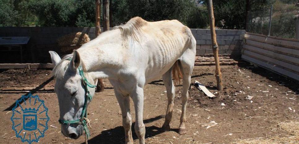 Invetigan al dueño de un caballo hallado desnutrido y abandonado