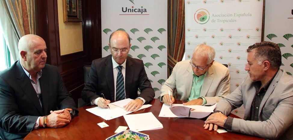 300 agricultores se beneficiarán del convenio suscrito entre Unicaja y la Asociación de Frutas Tropicales