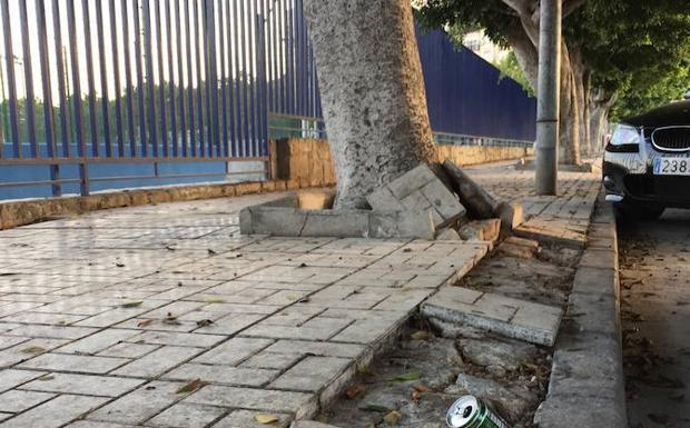 Alcorques rotos y basura diario sur for Polideportivo ciudad jardin malaga