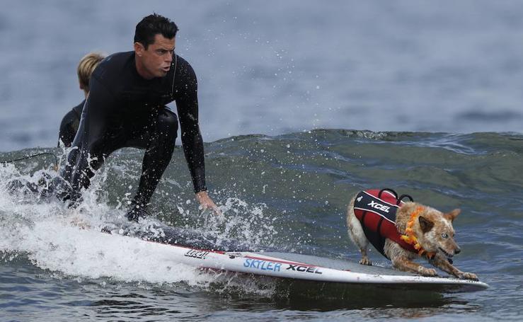 El Campeonato Mundial de Surf para perros en California
