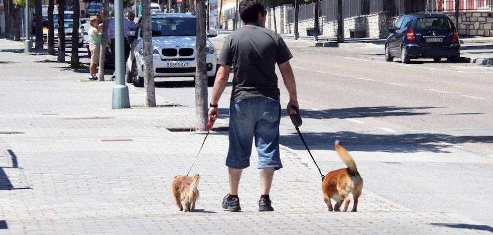 Vinagre contra el pipí canino en Estepona