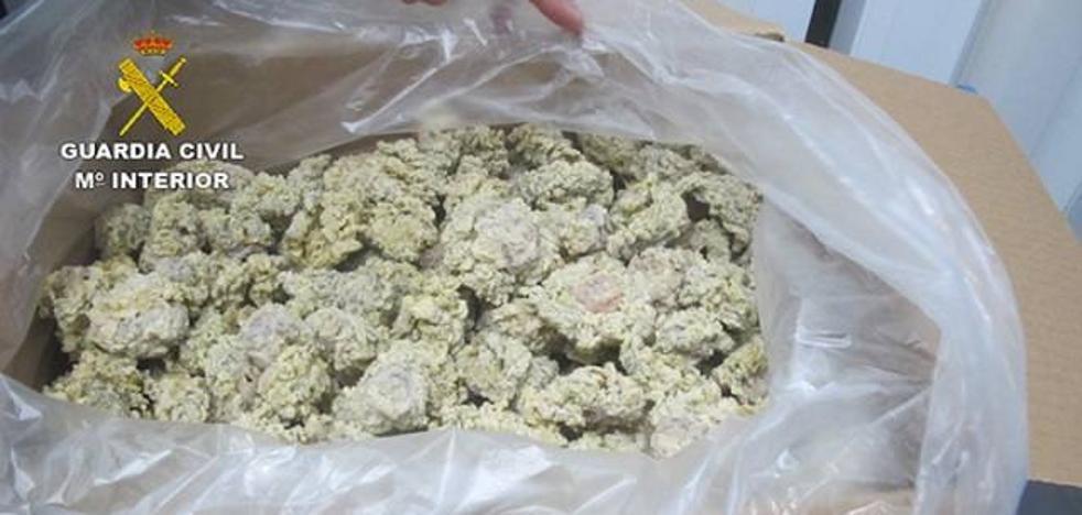Intervienen tres toneladas de 'ortiguillas' capturadas y puestas a la venta ilegalmente