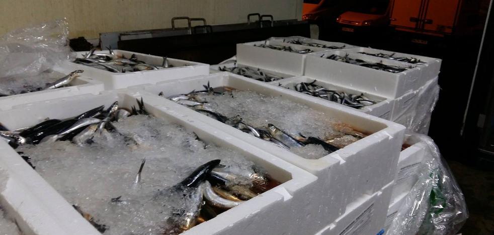 Decomisan más de 5.700 kilos de pescado y marisco en Mercamálaga