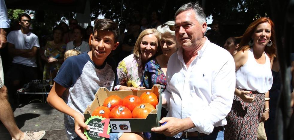 2.100 euros por el mejor lote de tomate huevo de toro de la temporada en Málaga