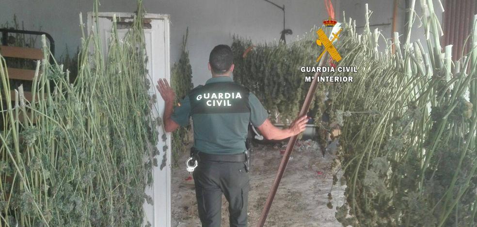 Cae en la Serranía de Ronda una red internacional dedicada al cultivo de marihuana