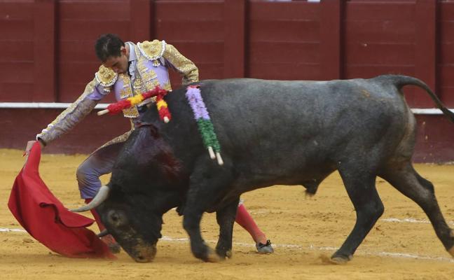 Fortes, dos orejas y cornada y un gran toro de Victorino en Málaga