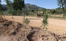 La Diputación retomará en otoño el plan de reforestación con 70.000 plantaciones