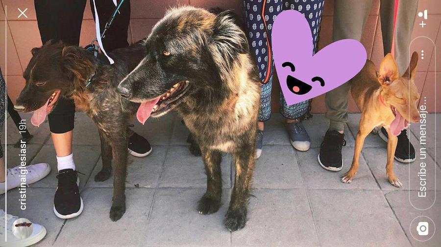 De la perrera de Málaga a la casa de Julio Iglesias en Punta Cana