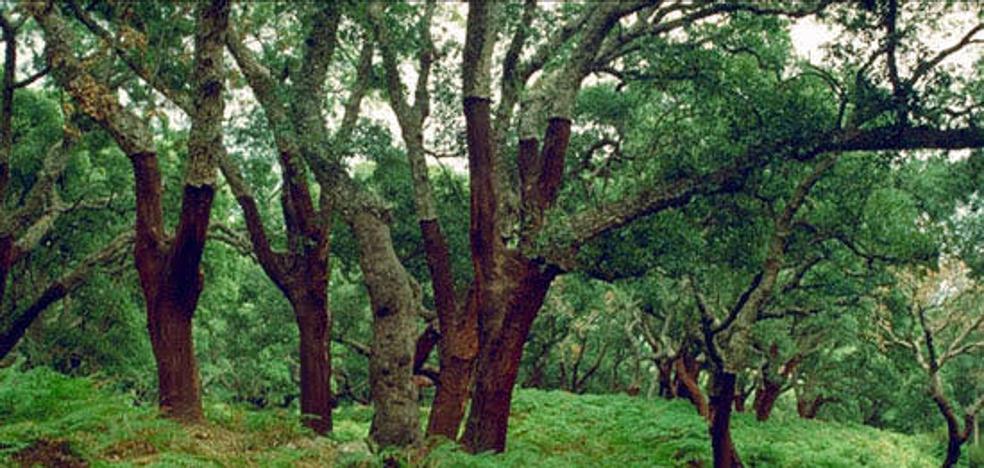 La Junta amplía el Parque Los Alcornocales para proteger aún más La Almoraima