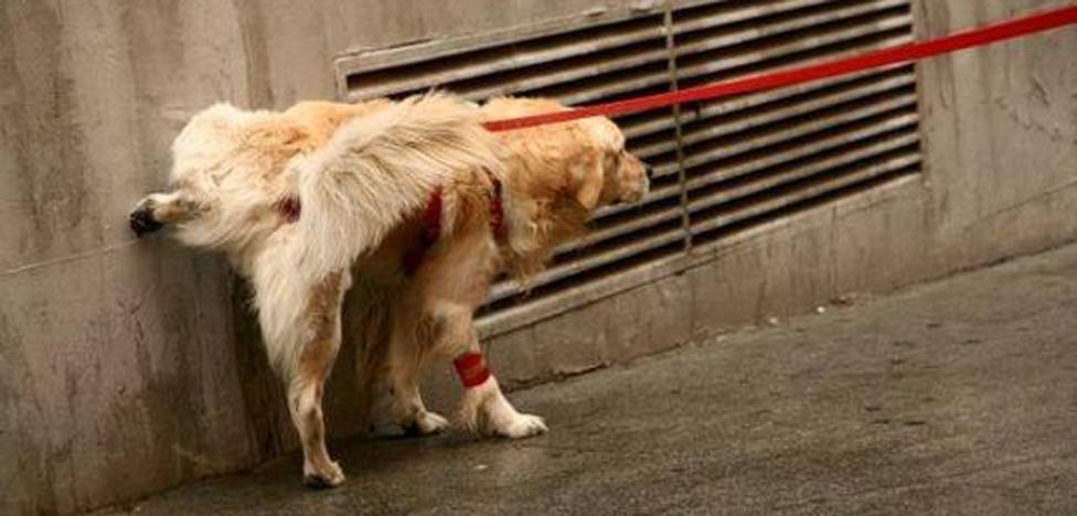 El Ayuntamiento de Málaga invita a los dueños de perros a combatir el pipí con agua y lejía