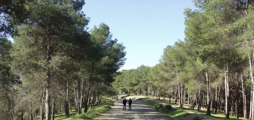 Doce rutas de senderismo para hacer CON niños este otoño EN Málaga