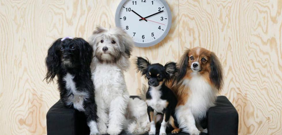 Ikea lanza una colección para animales