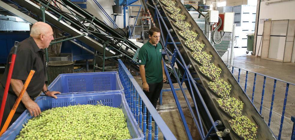 Aceites malagueños de oliva con sello muy particular