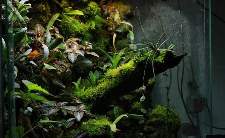Pequeños ecosistemas tropicales en Málaga