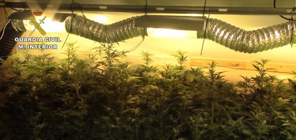 La Guardia Civil detiene en Mijas al cabecilla huido de una red criminal belga dedicada al cultivo de marihuana