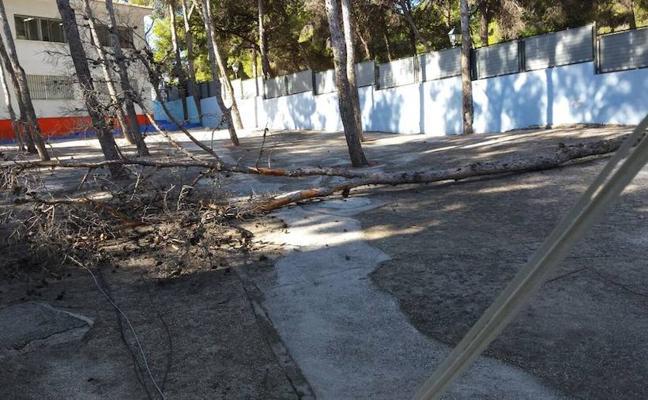 La caída de un pino de 15 metros en el patio de un colegio en Torremolinos pone en pie de guerra a padres y profesores
