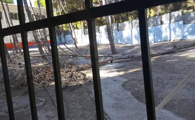 Un colegio de Torremolinos traslada el recreo por la caída de un pino de 15 metros