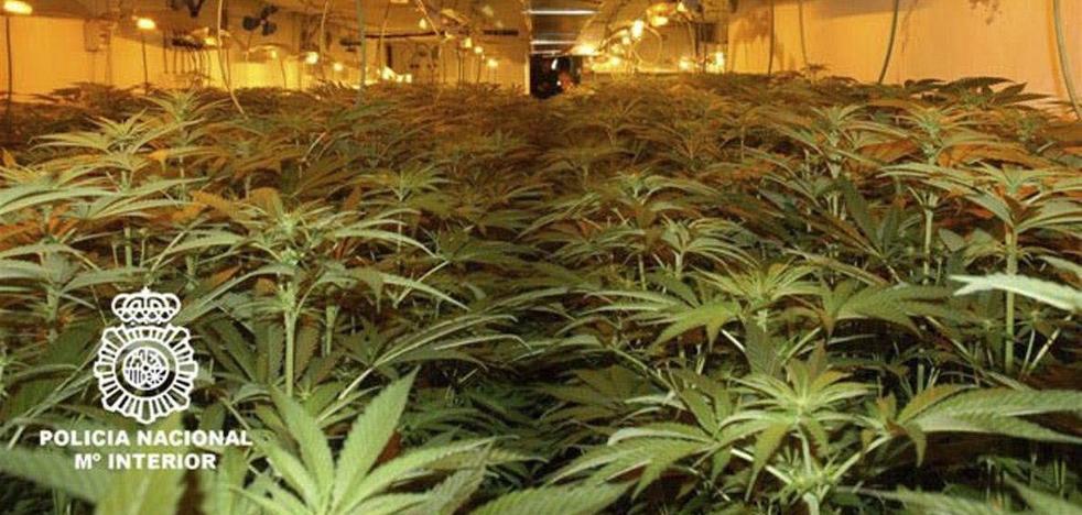 Dos menores, entre los detenidos al desmantelar un cultivo de marihuana en una antigua peluquería de Málaga