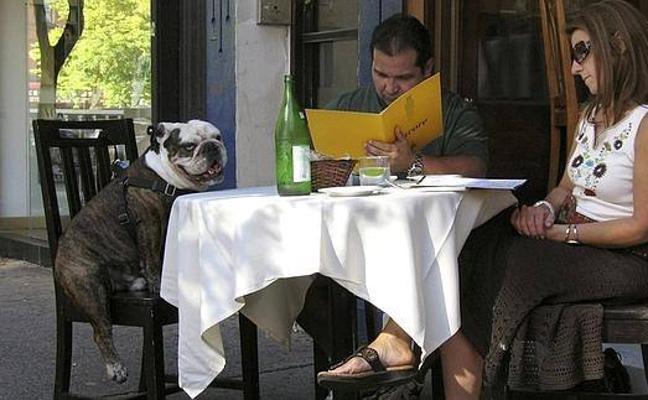 Una veintena de restaurantes amigos de los perros te invitan a pasar con tu mascota