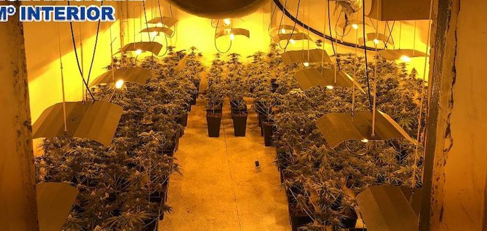 Cinco detenidos y 961 plantas de marihuana intervenidas en Málaga