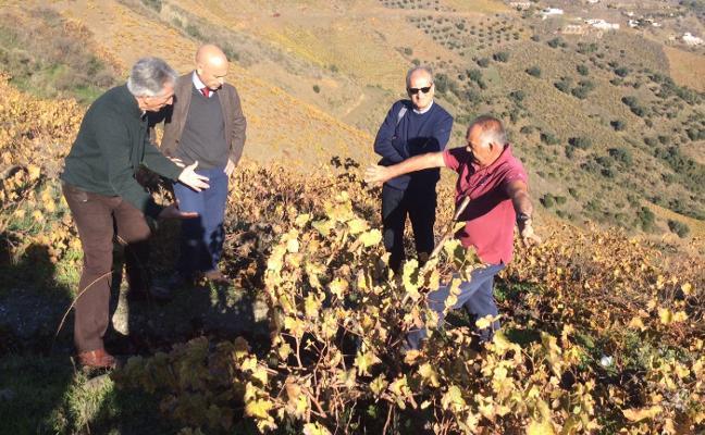 La Unesco examina con detalle sobre el terreno al sector de la pasa moscatel