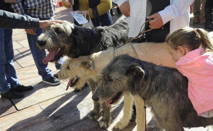 La pasarela promocional con motivo del 6º Salón del Animal de Compañía en Málaga, en fotos