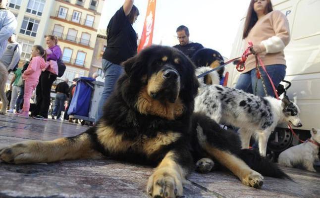 Las mascotas se ponen 'de moda' en Málaga
