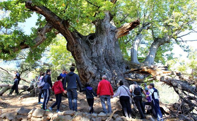 Abrazo colectivo al Castaño Santo de Istán por su declaración como Monumento Natural