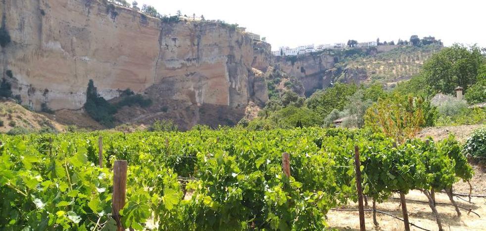 20 bodegas que puedes visitar en Málaga