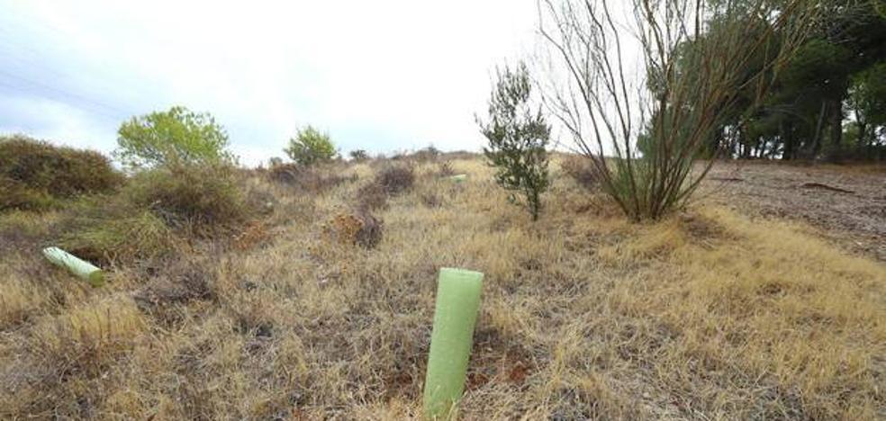 El Ayuntamiento reconoce que podría haber regado en las reforestaciones