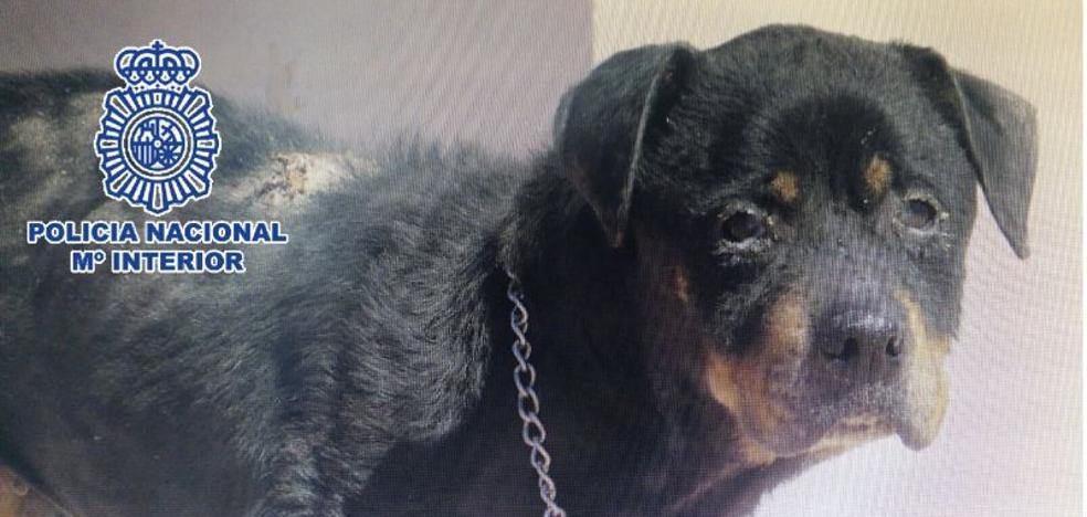 Detienen a una mujer en Vélez-Málaga por maltratar a su perra durante años