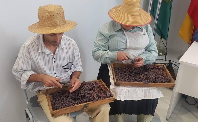 La pasa se convierte en el primer cultivo europeo Patrimonio Agrícola Mundial