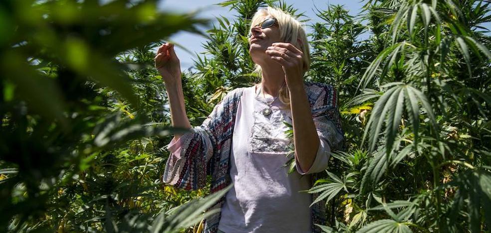 El Congreso pone a la cola la regulación del uso terapéutico del cannabis