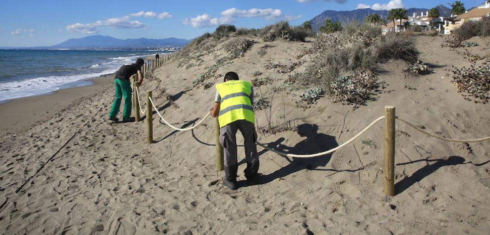 Guerra a las especies invasoras en las dunas