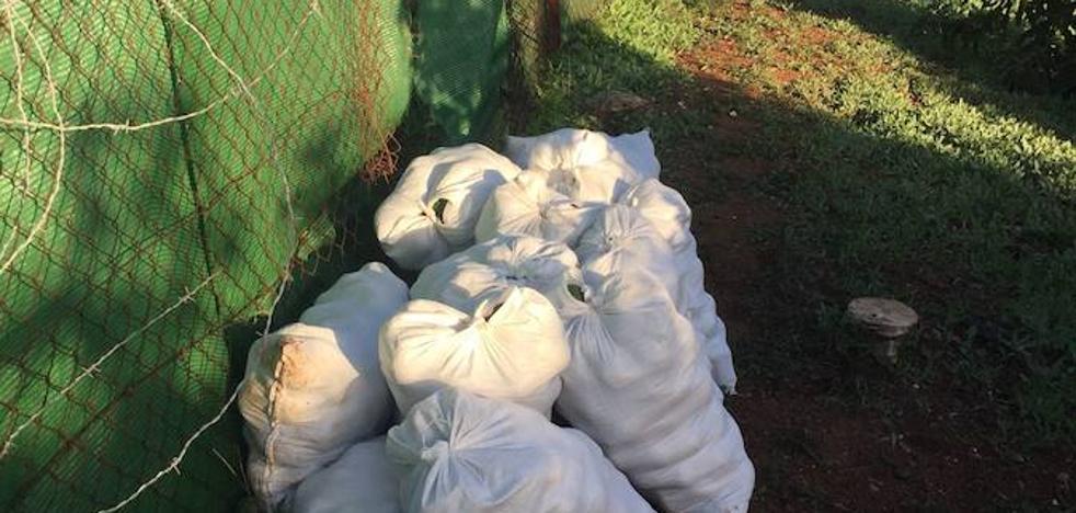 Productores de aguacates recurren a la vigilancia privada para evitar los robos
