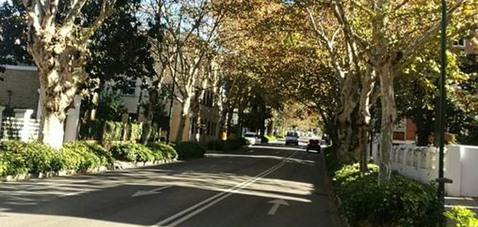 Poda de árboles y caída de ramas en El Palo y de Pedregalejo