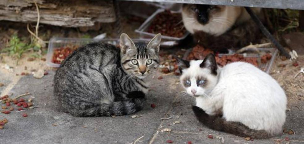 Piden cárcel para dos personas por envenenar a los ocho gatos de su vecina en Málaga