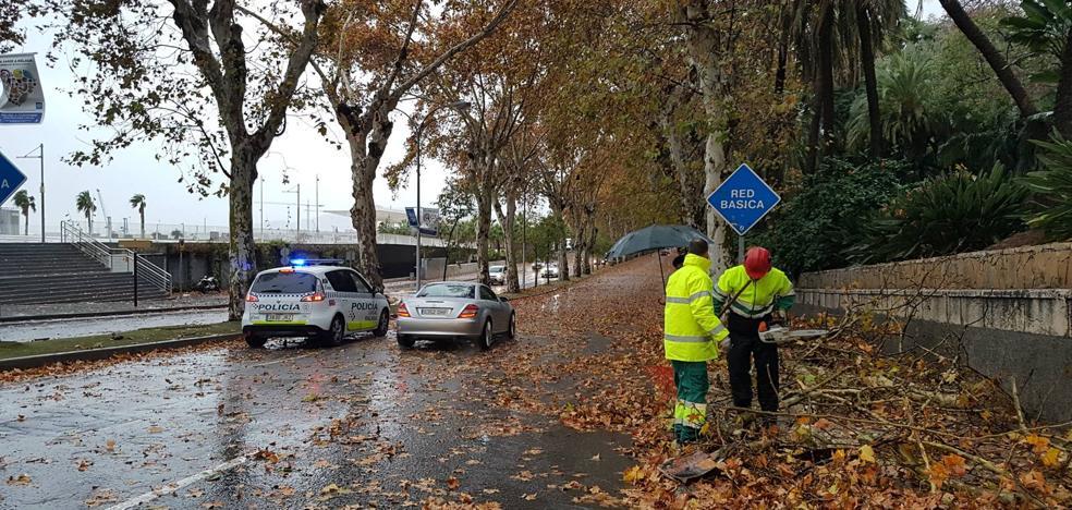 La caída de dos árboles obliga a cerrar el tráfico del paseo de los Curas y un lateral de la Alameda Principal