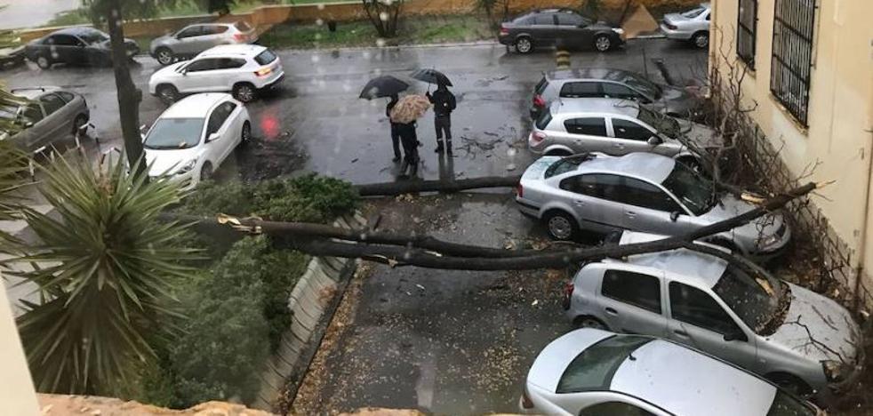 ¿A quién reclamar si una tempestad tira un árbol sobre nuestro coche o moto?