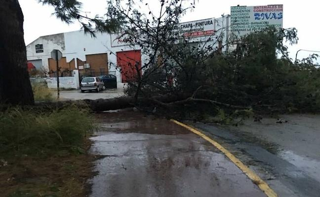 Un árbol caído y corte de tráfico en Ronda