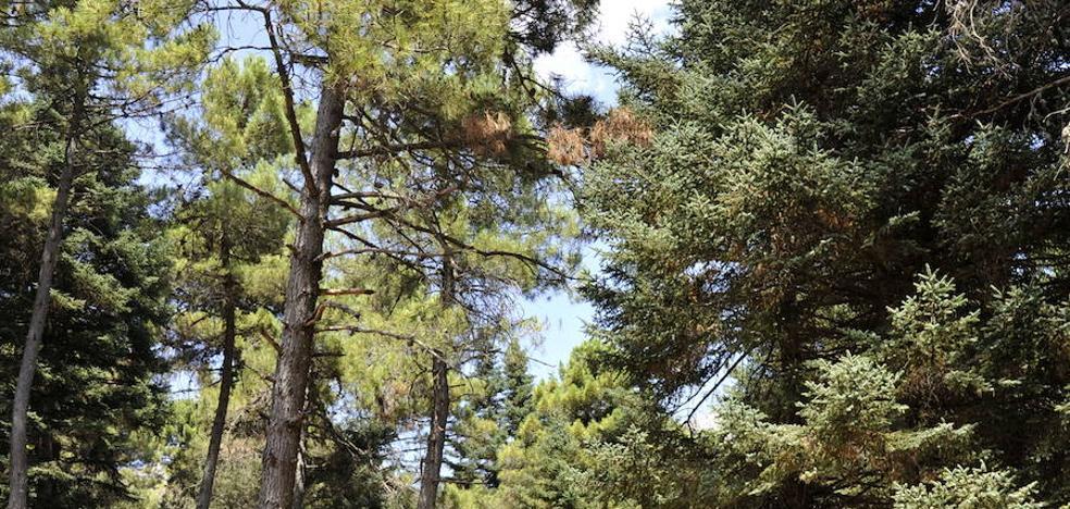 Sierra de las Nieves da un paso definitivo hacia su conversión en Parque Nacional