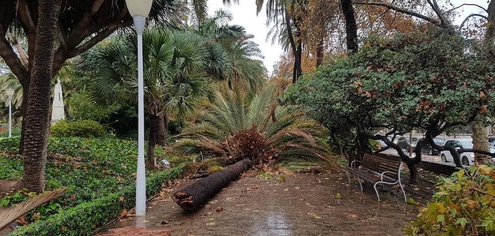 El viento y la caída de árboles y ramas provocan caos de tráfico durante la mañana en Málaga